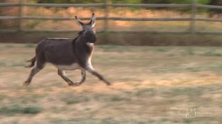 I love watching him run